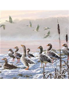 WINTER RIVER GEESE